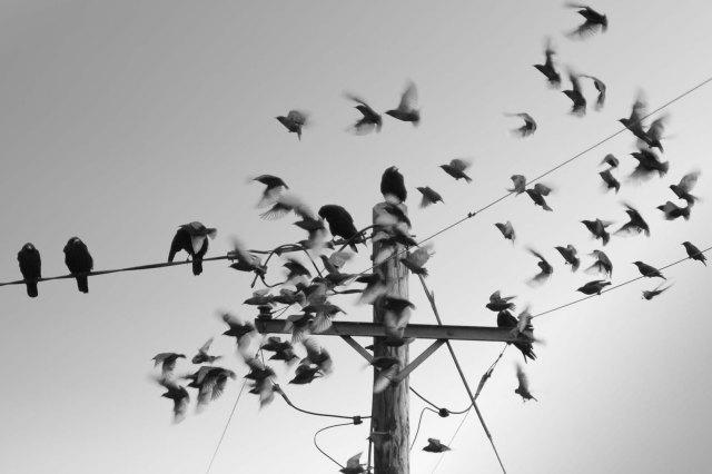 BrianCooneyPhotography-0133-Edit-Edit-2